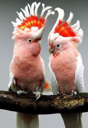 Фото вы найдете в разделах: хищные птицы урала фото.