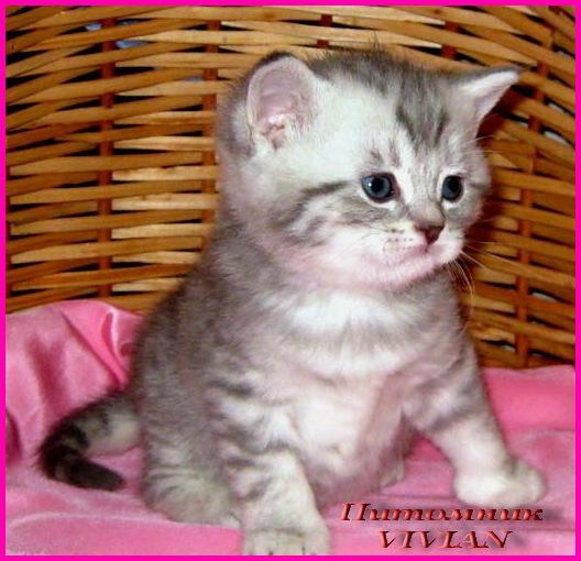 фото котенка из вискаса #16