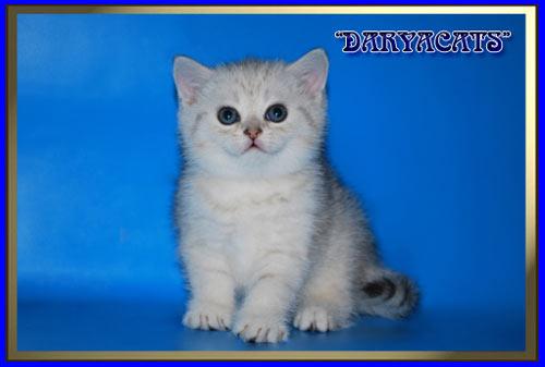 фото котенка из вискаса